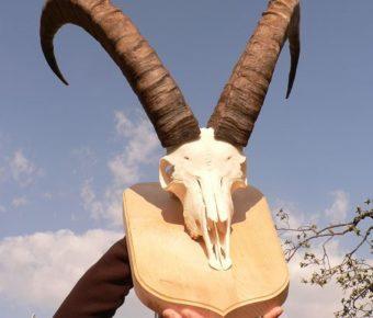 Association des techniques de chasse préhistorique des Grisons. Doma Ems Suisse